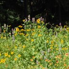 Pocket Prairie: Rewards of Native Landscape